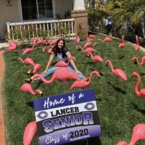 Carlsbad Flamingos