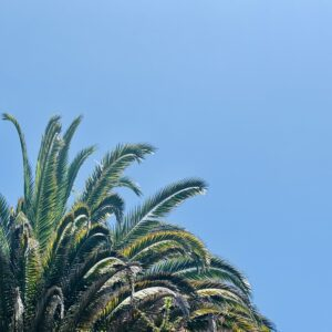 Vacation Sky
